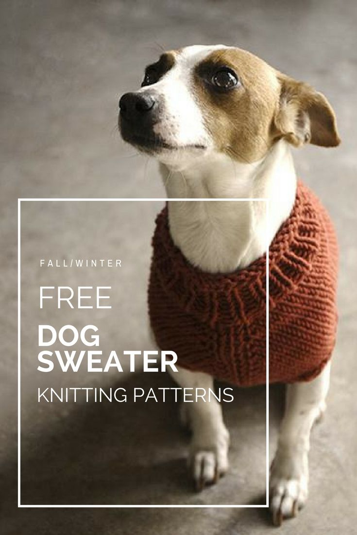 10 stunning examples of beautiful fall dog sweaters sweater free dog sweater knitting patterns for extra small small medium large and extra bankloansurffo Gallery