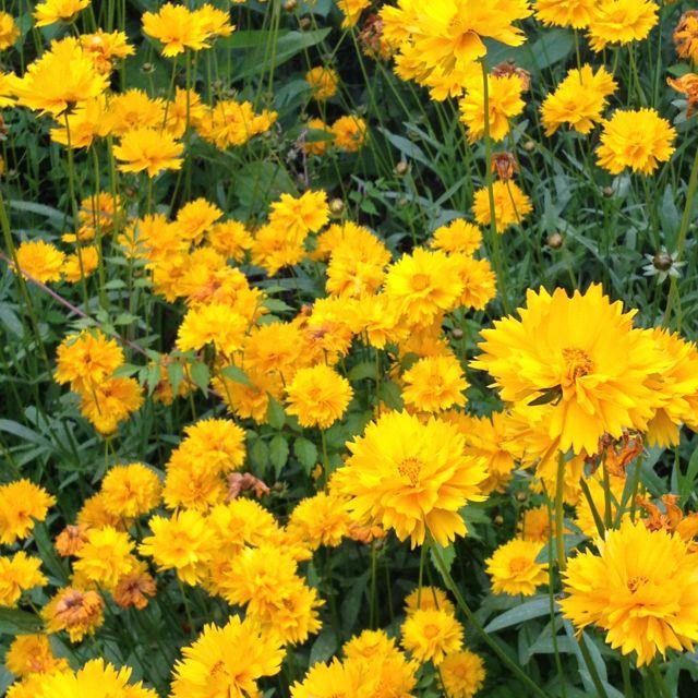 un prato di fiori | Yellow 4 Eleonora | Pinterest