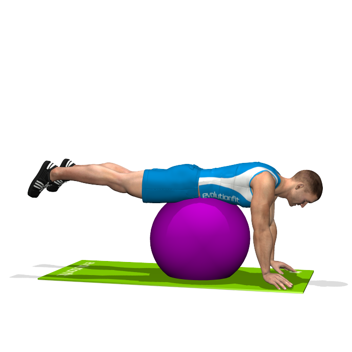 Stability Ball Glute: HIP EXTENSIONS ON STABILITY BALL INVOLVED MUSCLES DURING