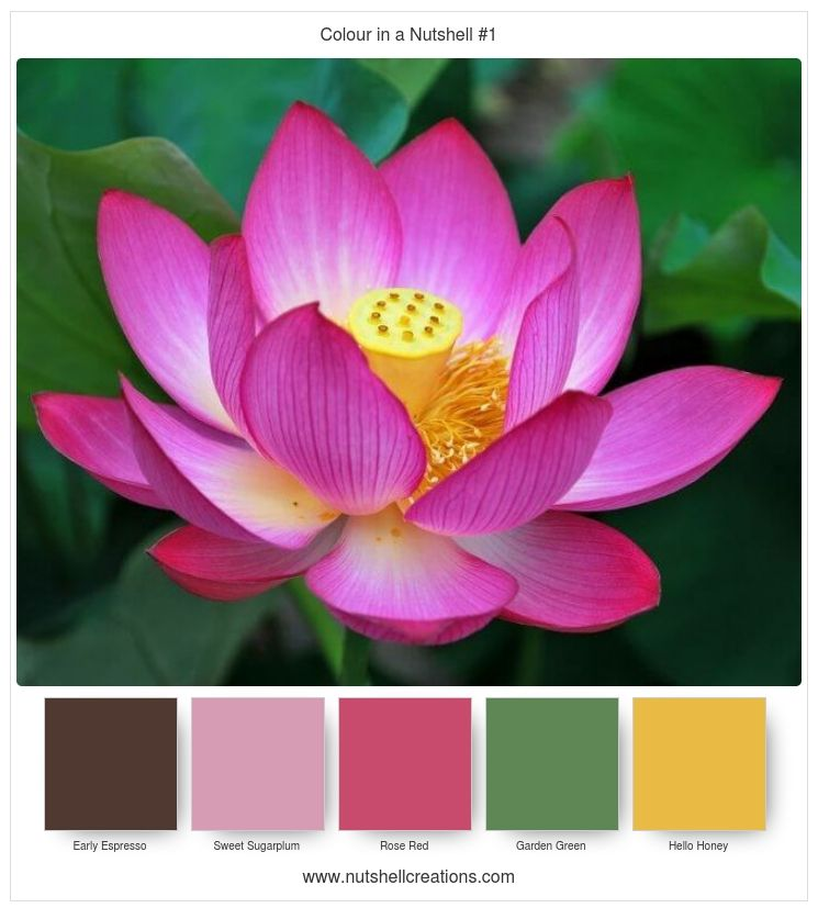 Pin by sue caldwell on colors pinterest tattos color combos and lotus lotus flower designlotus flowerslotus flower meaningspink mightylinksfo Image collections