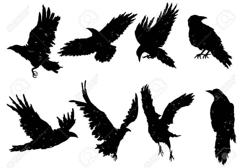 Set Of Ravens A Collection Of Black Crows Silhouette Of A Flying Crow Vector Illustration Of Ravens Silhouette Grun Crow Flying Crow Silhouette Crow Tattoo