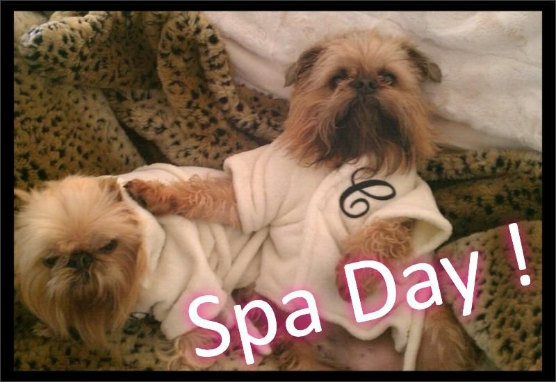 Brussel Griffons having a spa day Spa day, Cute animals