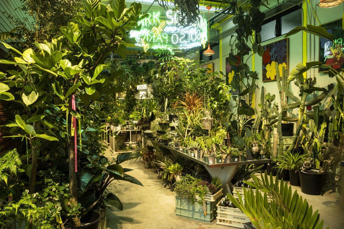 ソルソパーク 珍しい植物 植物 造園