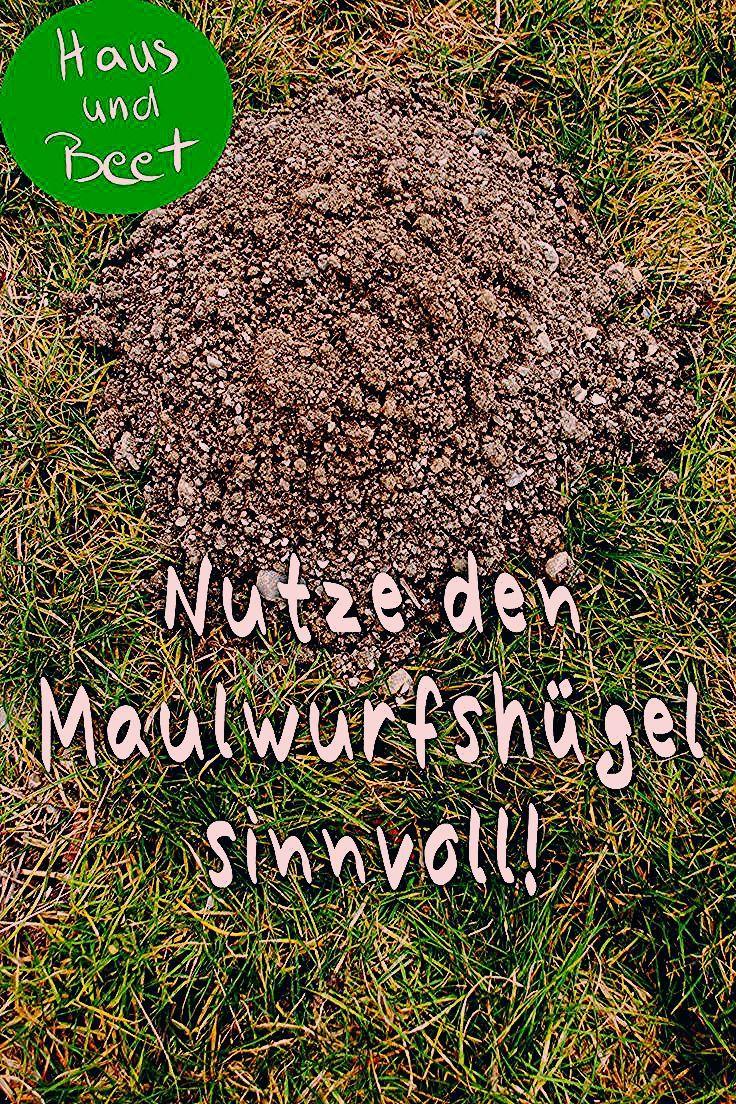 Photo of Säen mit Erde aus dem Maulwurfshügel