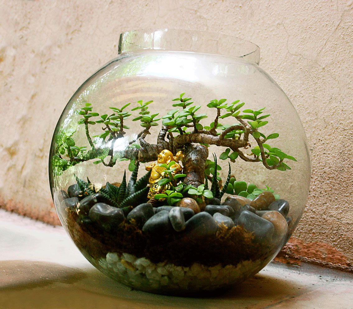 Posts about glass bowl plants on ozziesterrariums - Ozziesterrariums.wordpress.com Plants Pinterest Terraria
