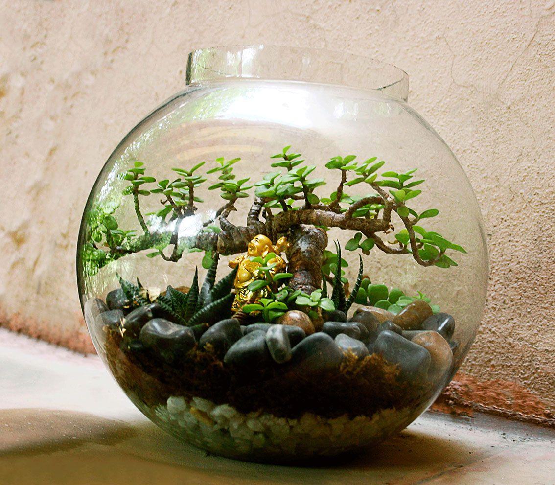 picturesque best large house plants. Posts about glass bowl plants on ozziesterrariums wordpress com  Pinterest Terraria