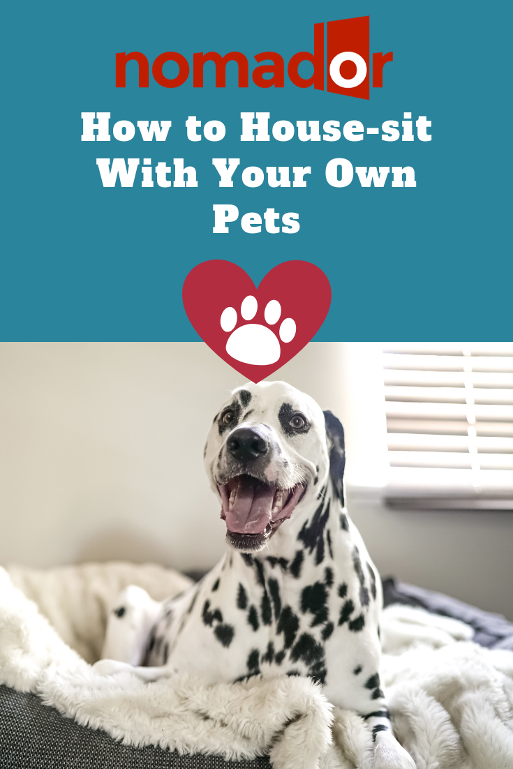 How To House Sit With Your Own Pets House Sitting Pets House