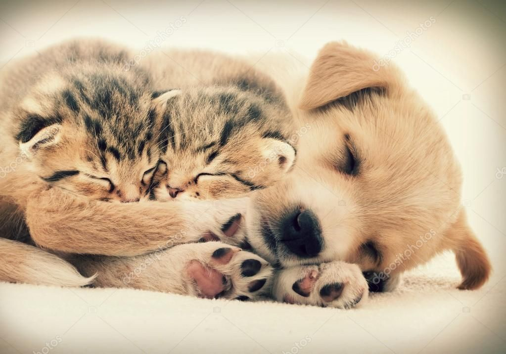 Puppies And Kittens Sleeping Together The Cutest Puppies Sleeping Kitten Newborn Puppies Kittens And Puppies