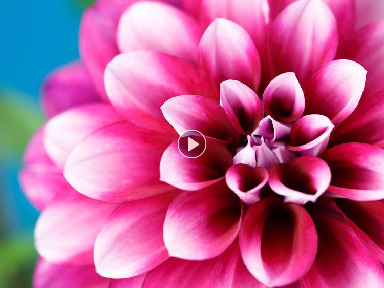 Comment planter les bulbes d'été Plants, Flowers, Garden