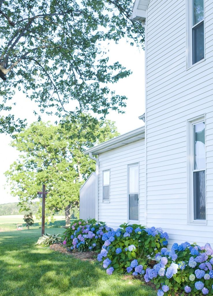 9 Must Have Plants For A Farmhouse Flower Garden