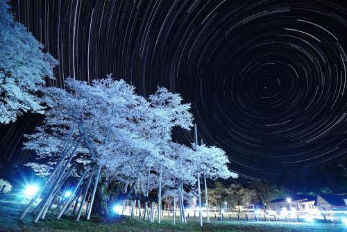 119:「夜の淡墨公園は淡墨桜と星がとてもきれいでした。」@根尾谷・淡墨公園
