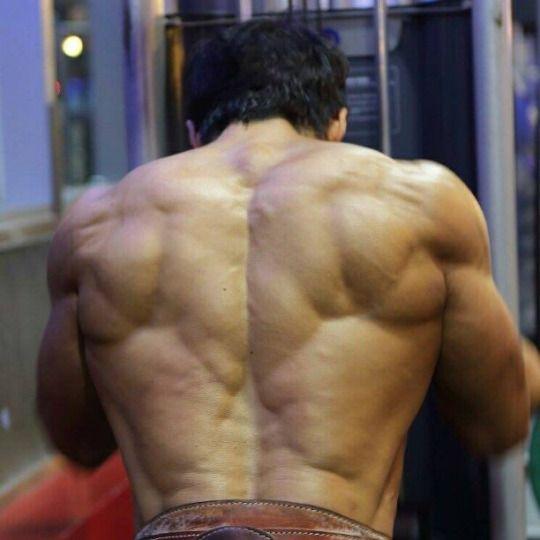 Comalla | Anatomy Reference | Pinterest | Músculo