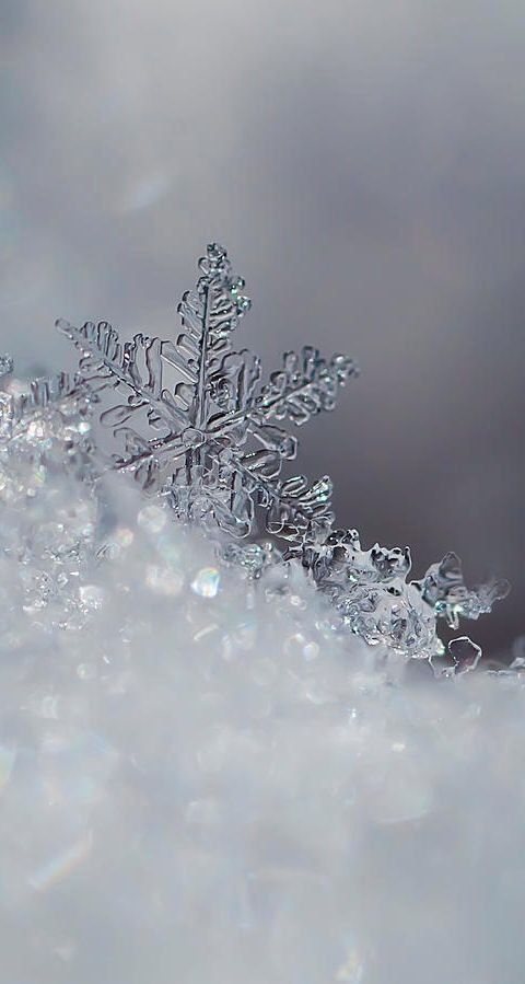 Icy snowflakes winter iPhone android cellphone lock screen wallpaper background - #android #background #cellphone #Icy #iPhone #lock #naturlocken #screen #snowflakes #Wallpaper #Winter #displayscreen