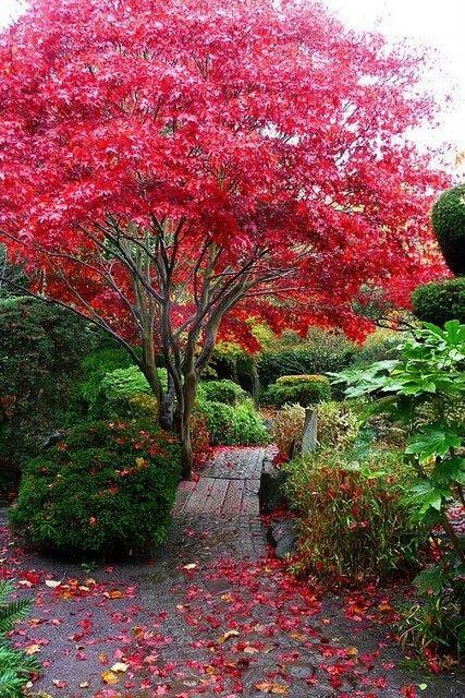 Liverpool England | Dream garden