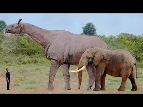 Largest Land Animal In The World Ever | www.pixshark.com ...