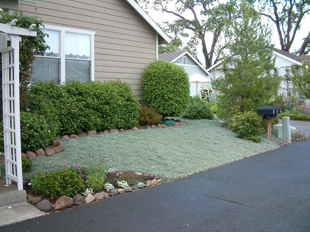 Carpet of Dymondia Lawn alternatives, Backyard