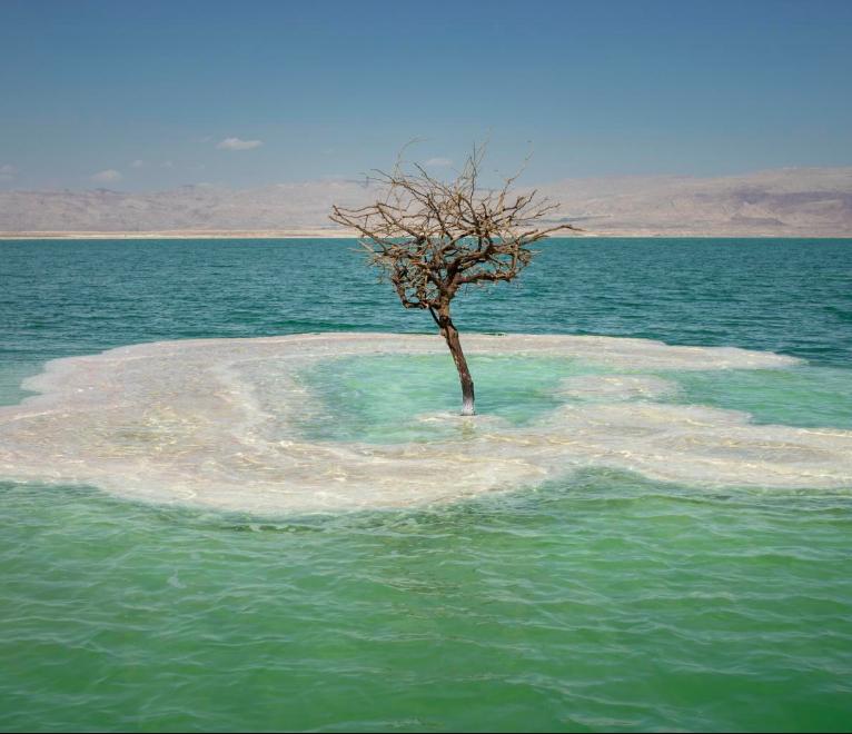 Dead Sea Tree Sea Photography Travel Dreams Dead Sea Israel Sea Photography Dead Sea Israel Travel Dreams