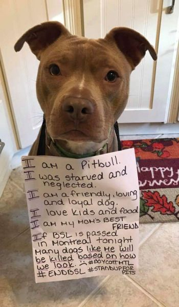 Pit Bulls Are Loving Dogs And It Always Depends The Owner
