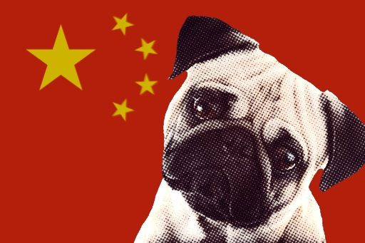 Pugs Came From China Pugs Originally Came From China And Their