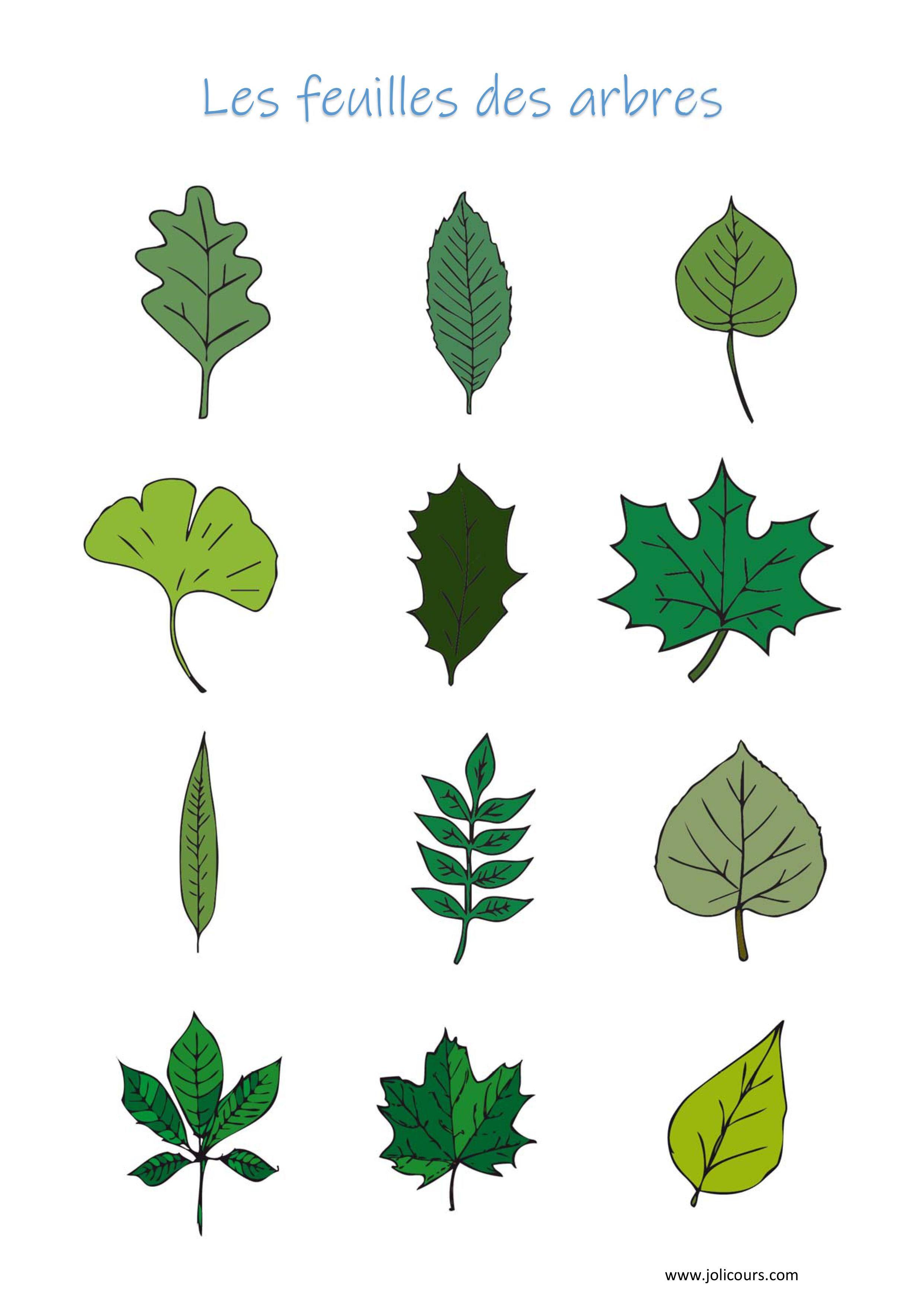 Les feuilles des arbres   Feuille, Découvrir le monde, Loup
