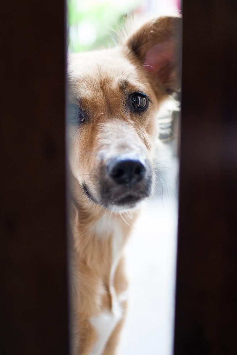 Dog peeking at the gate and waiting for his food ift