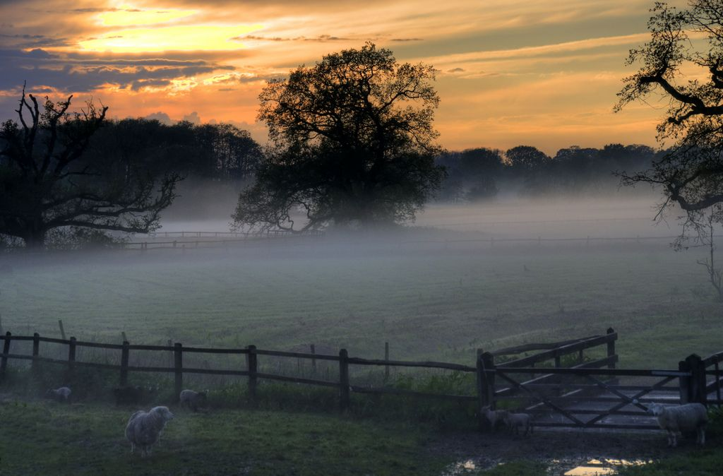 A misty morning with some sheep in the countryside around Fittleworth, Sussex.