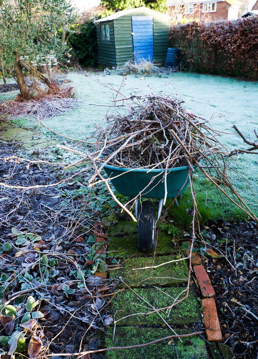 Que Faire Au Jardin En Janvier que faire au jardin en janvier ? | jardins, entretien jardin