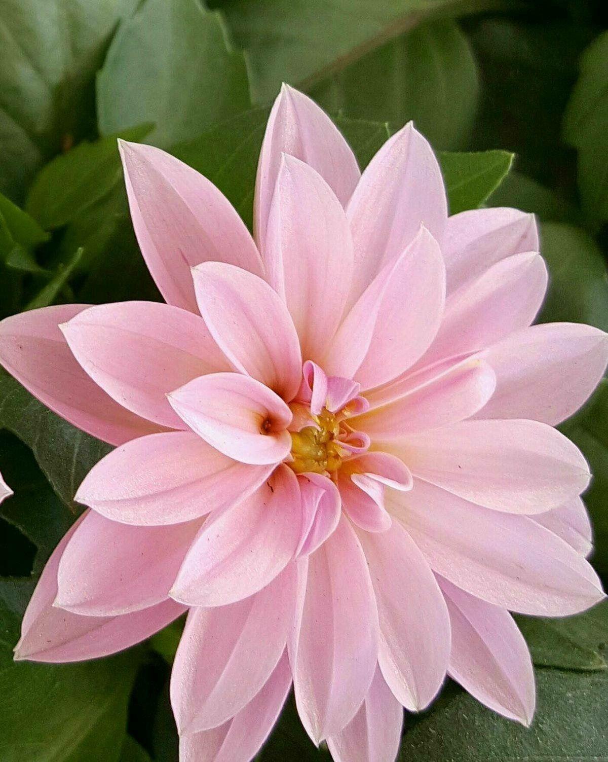 Pin De Liliana En Flores Pinterest Flores Flor Y Flores Naturales