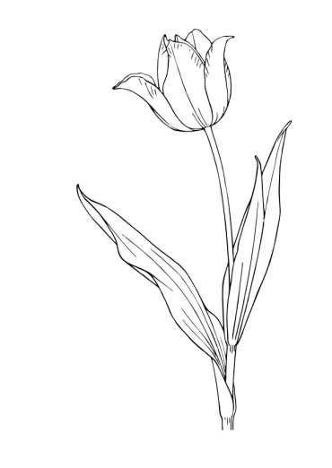 Planse Primavara Ghioceii Flori Primavara Flori Primăvară Mană