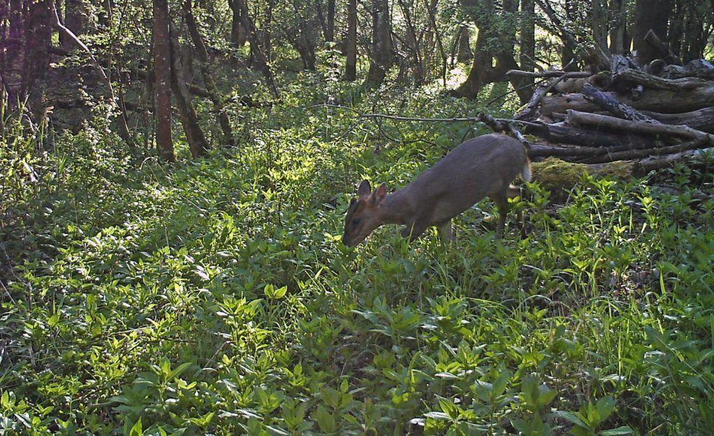 Bramble eater #wildlife - http://anenglishwood.com/?p=9514