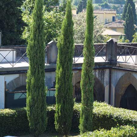 Photo de cypr s de florence d 39 italie existe en plusieurs tailles plantes du jardin - Cypres d italie totem ...