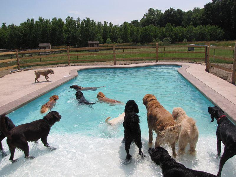 Lucky Puppy Country Doggie Daycare Myluckypuppy Com In Maybee Mi