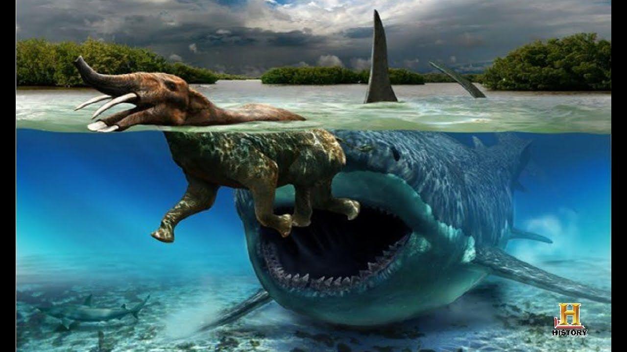 National Geograpihc Terrifying Prehistoric Sea Monsters Documentary Animals Extinct Animals Prehistoric Creatures