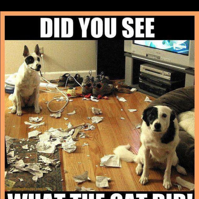 Pin by Kerry Werwage Martell on My Style Funny dog