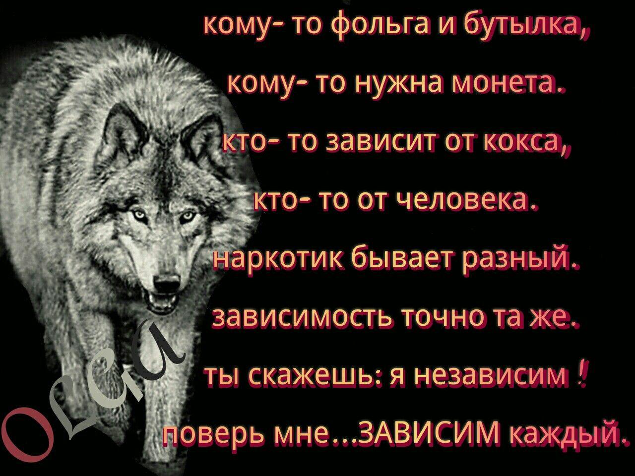 картинки волков с статусами смыслом мужские львиная