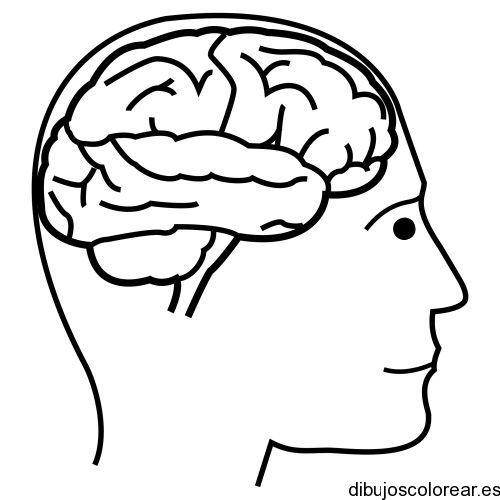 Resultado de imagen para dibujo para pintar del cerebro | PLANTILLAS ...