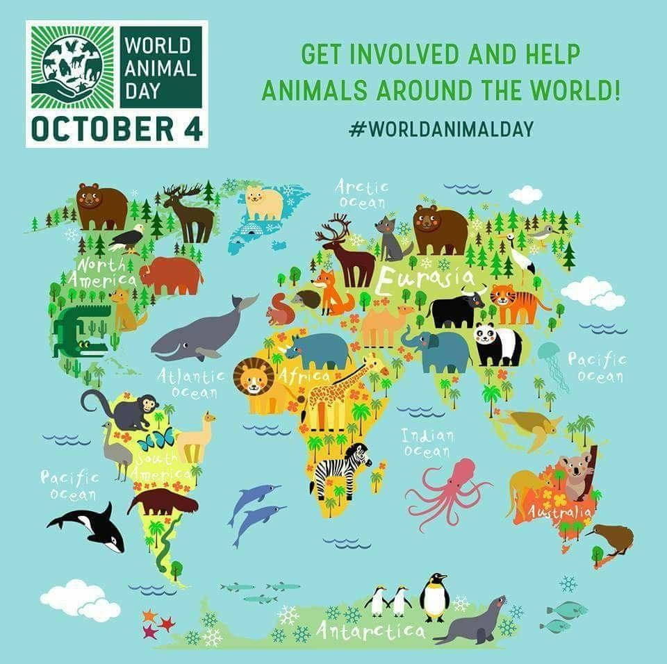 Pin by cyndy dent brooks fetty on animal advocacy pinterest animal animals world map poster mural light american decals gumiabroncs Images