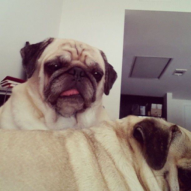 I Tried Taking A Nap Today And Woke Up To Sunny And Rosy Battling