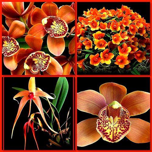 Varietal orchids. 1. Majolica, 2. Dendrobium cuthbersonii, 3. Bulbophyllum echinolabium, 4. orchid By Elisabeth Gaj