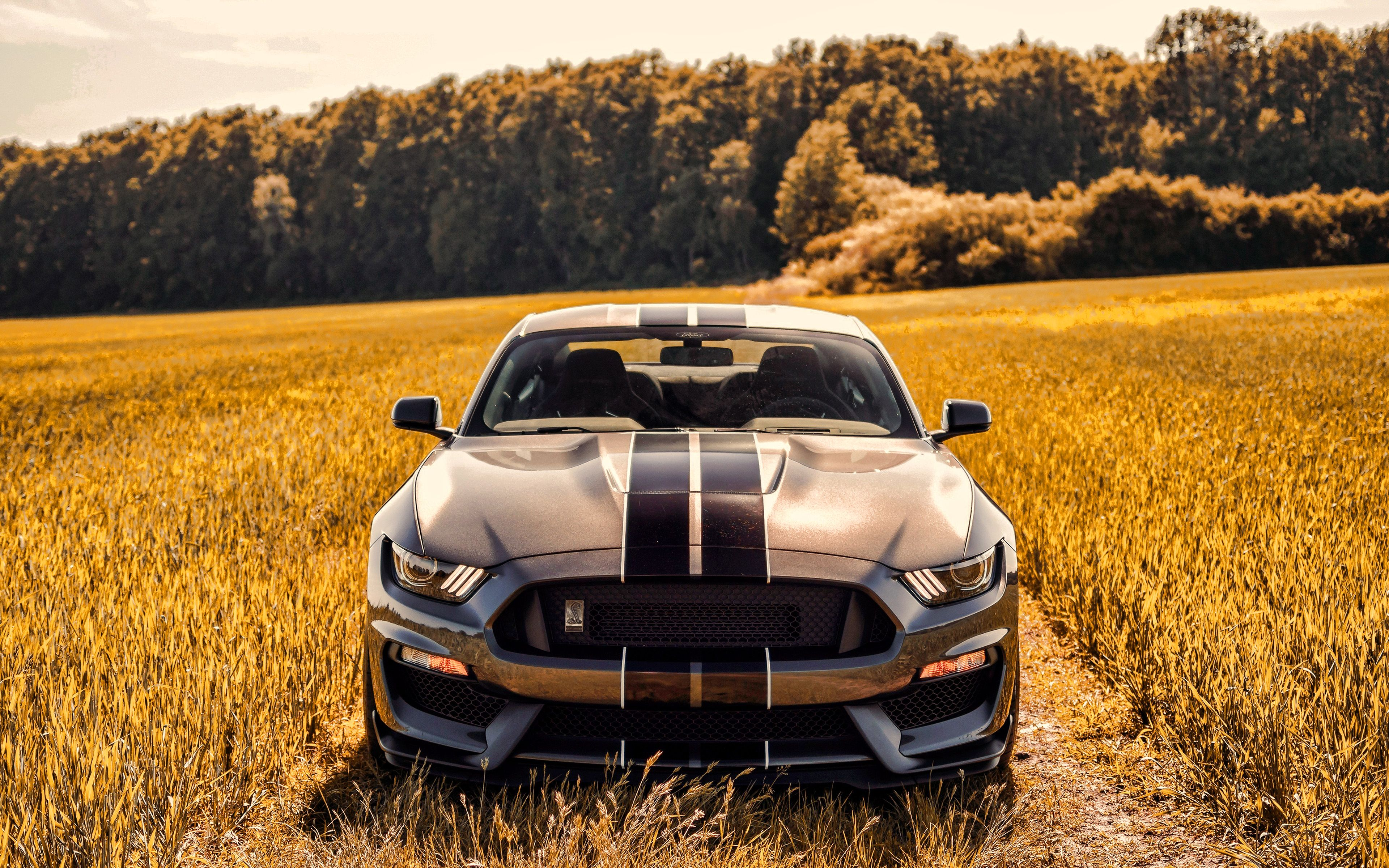 Ford Mustang Shelby Gt350 4k Offroad 2019 Cars Supercars 2019 Ford Mustang American Cars Ford Ford Mustang Shelby Mustang Shelby Ford Mustang Wallpaper