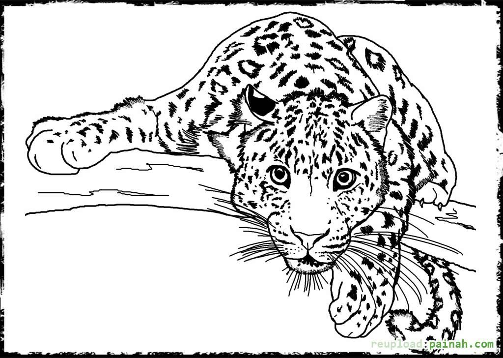 Detailed Animal Coloring Pages For Adults Detailed