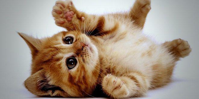 B b chat recherche google neko cats pinterest - Image de petit chat ...