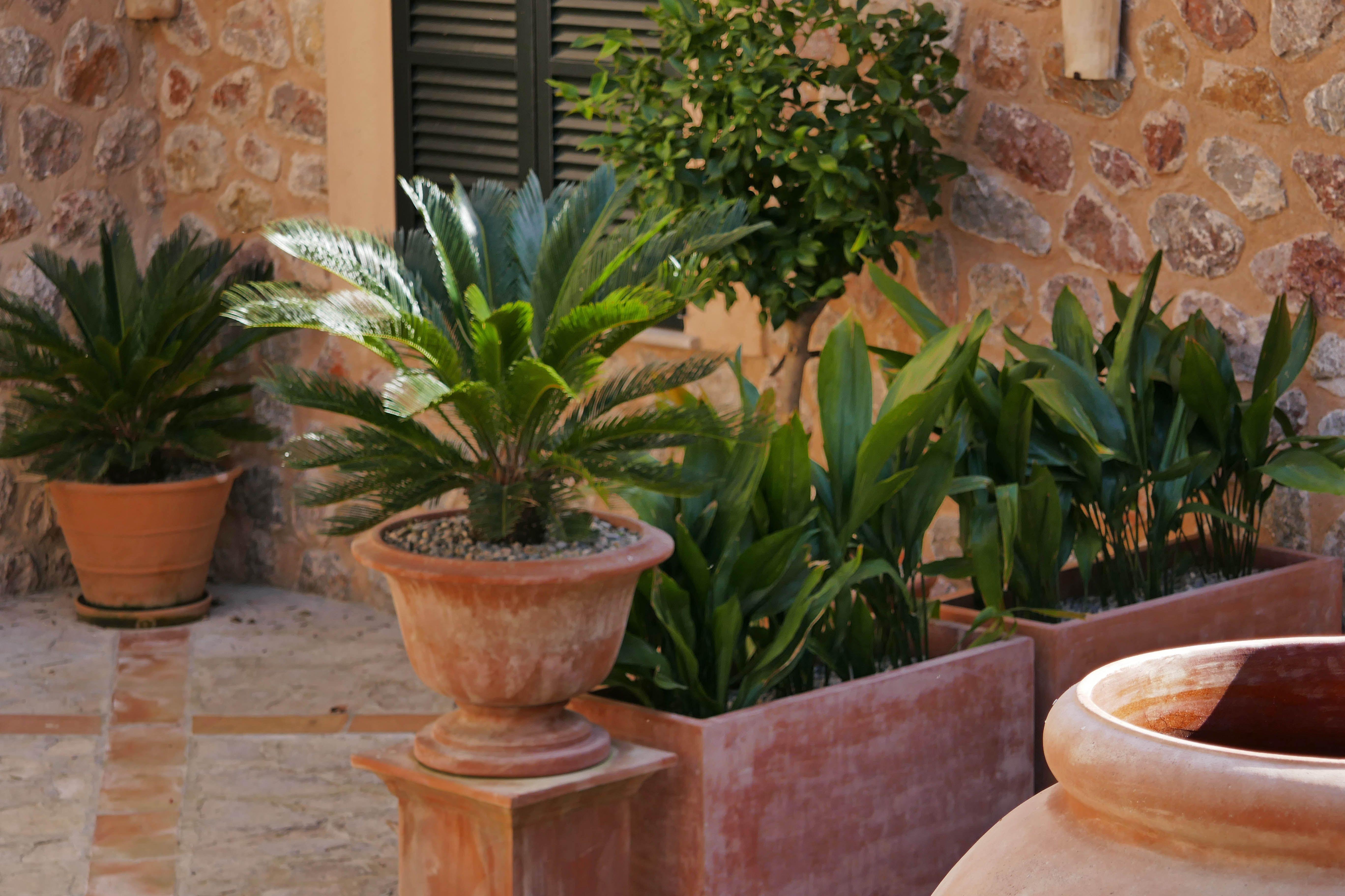 Terracotta Pots A Classic Mediterranean Courtyard Terracotta Pots Garden Pots Garden Design