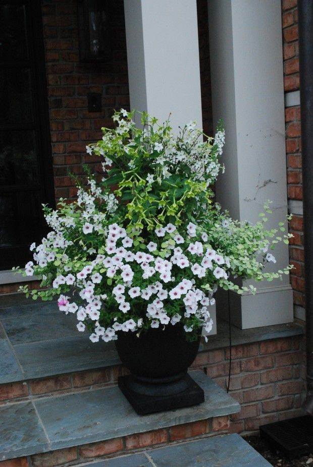 Pretty plants arranged in container container flowers pinterest note use of both green and white nicotiana deborah silver container planting design mightylinksfo