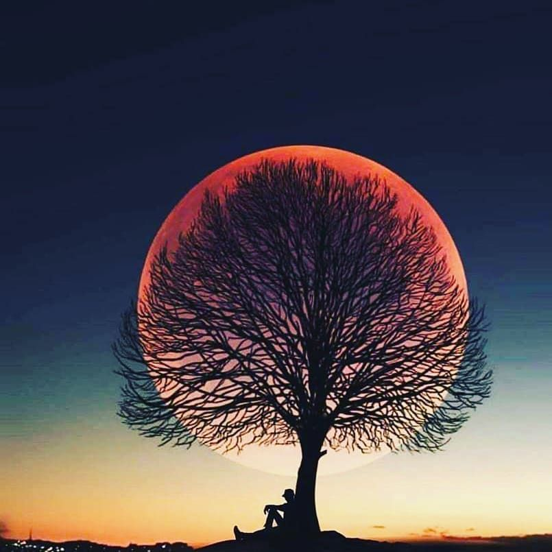 New The 10 All Time Best Home Decor In The World Tree Nature Silhouette Landscape Sunset Sky Fall Shoot The Moon Beautiful Moon Moon Photography