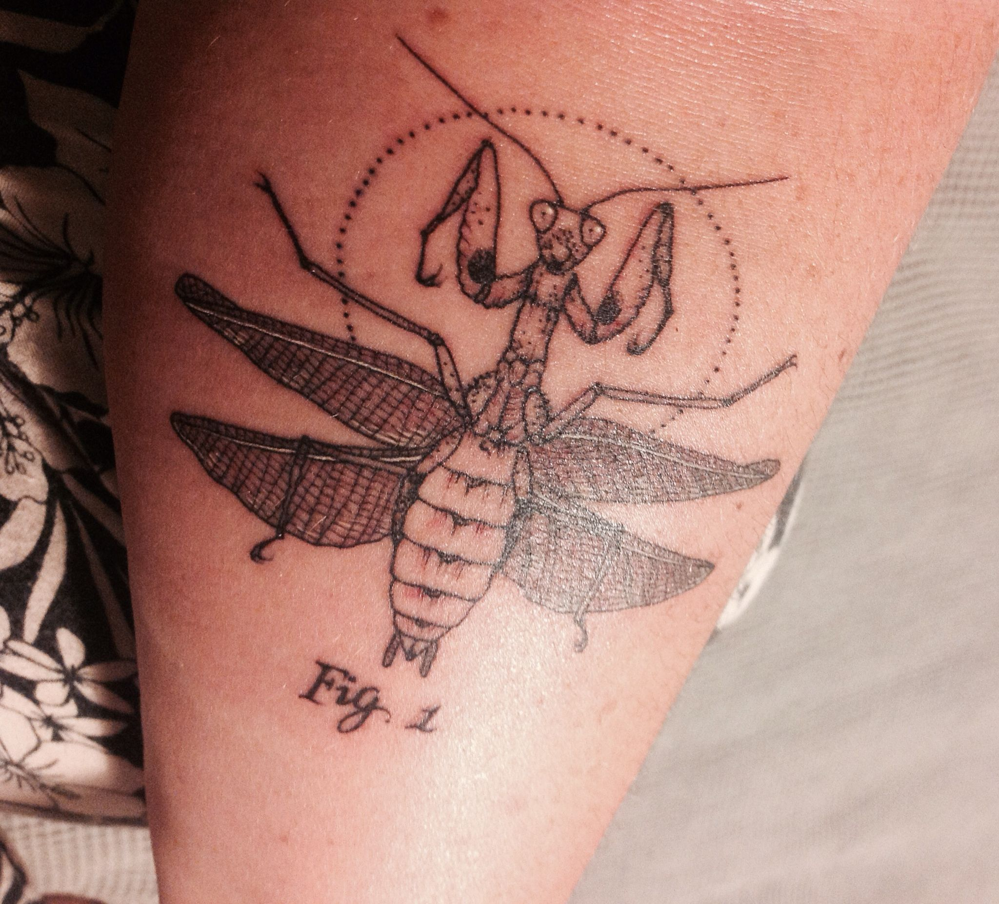 Scientific Illustration Praying Mantis Tattoo By Jasper At Seventh Day Studio New Zealand Mantis Tattoo Tattoos Insect Tattoo