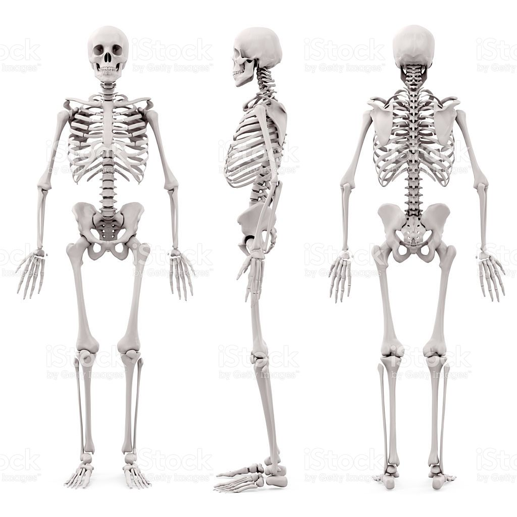 3 d esqueleto humano sobre fondo blanco foto de stock libre de ...