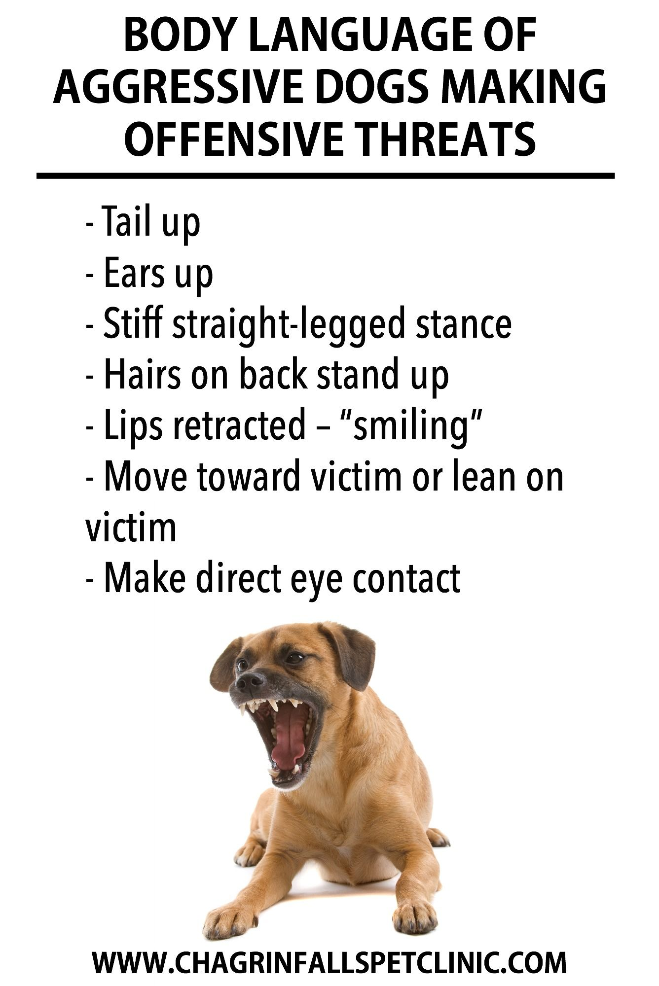 Learn To Recognize The Early Warning Signs Of Aggression By