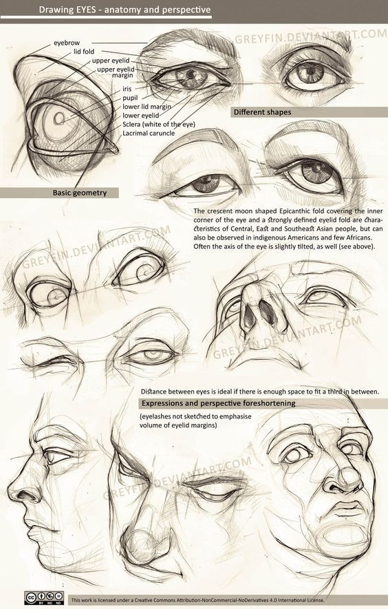 Character Design Collection: Eyes Anatomy | Reference And Tutorials ...