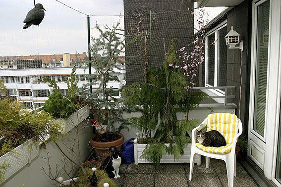 Balkonien für Katzen   GELIEBTE KATZE Magazin